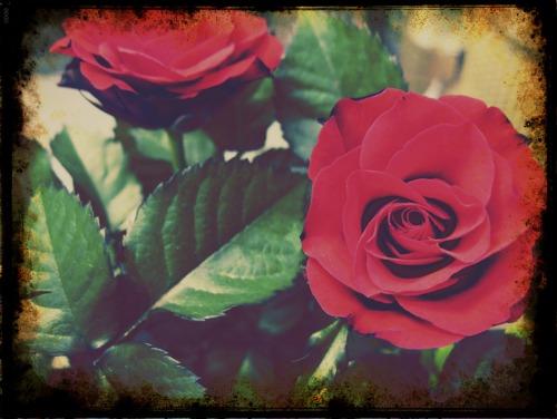 Flowers2-2